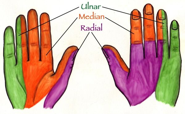 Innervation of the Hands: Google Image Result for http://meds.queensu.ca/courses/assets/modules/clerk_acutehand/sensory-innervation.jpg