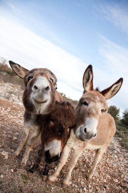 :) sweet donkeys
