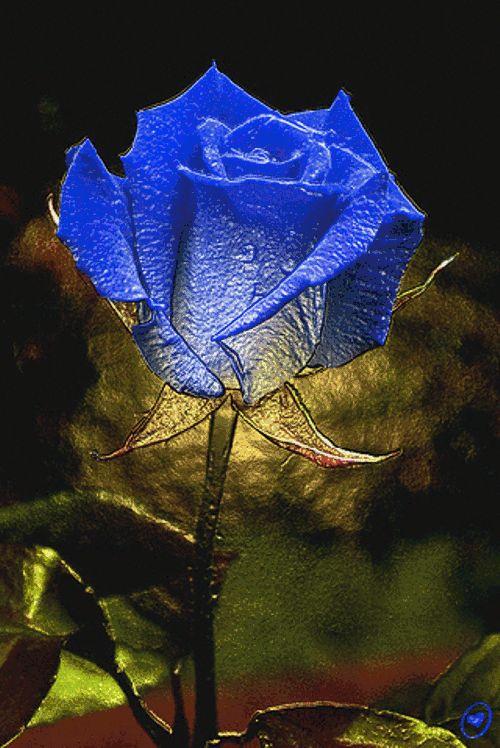 rosa blu.gif - Rose glitter grafica glitter immagini fiori gif animate-Roses glitter graphics glitter flowers animated gif images Grafica glitter per i  vostri spazi web COPIA IL CODICE PER AGIUNGERE QUESTA IMMAGINE NEL TUO SPAZIO:            Rose
