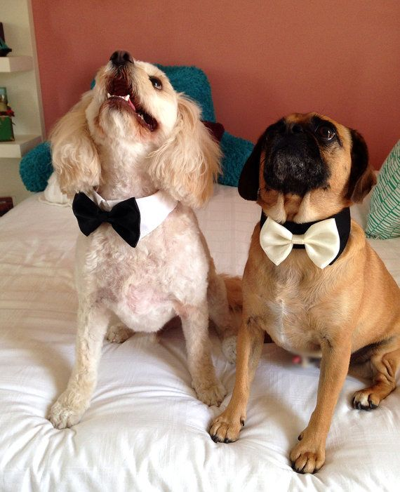More Colors Available Dog bow tie collar dog by TwinkleMingle