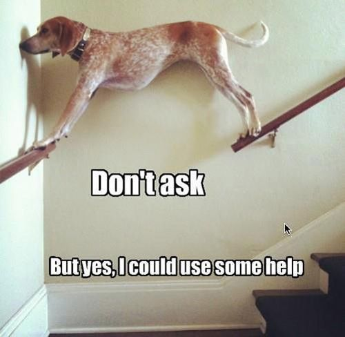 A dog on stair rails.