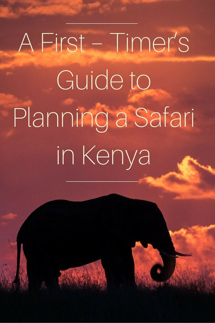 Going on safari is a life-changing experience. Find out what to expect, how to prepare and what you'll do when you get there. Tips from packing to tips to photography recs.  (scheduled via http://www.tailwindapp.com?utm_source=pinterest&utm_medium=twpin&utm_content=post25526530&utm_campaign=scheduler_attribution)