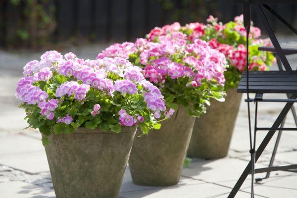 pflegeleichte balkonpflanzen geranien blumentöpfe farbig schön, Garten ideen
