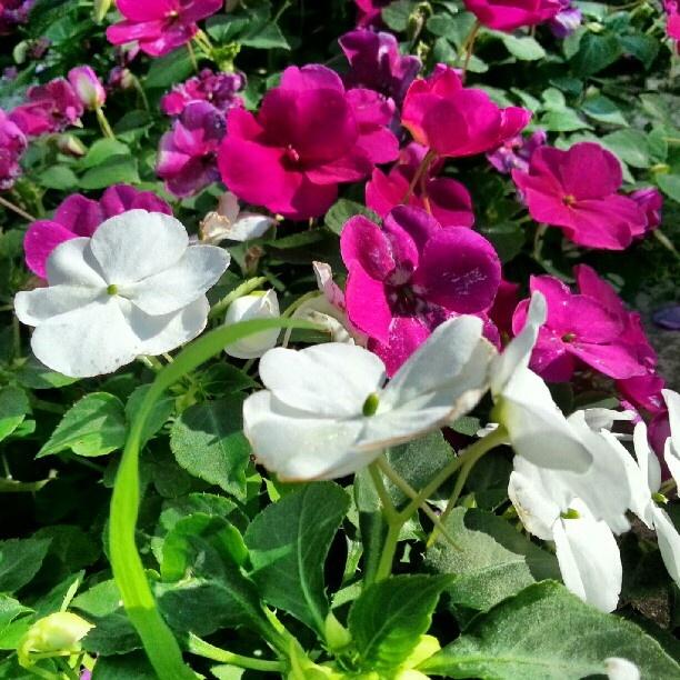 Apartment Flowers - @hanmono- #webstagram