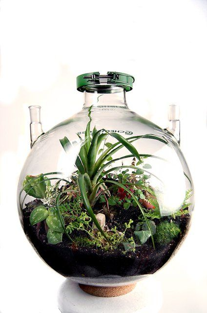 I want a group of different sized and shaped ecospheres so bad!!