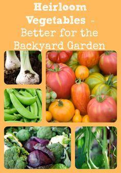 Explains why heirloom vegetables are better for backyard or homestead gardens.