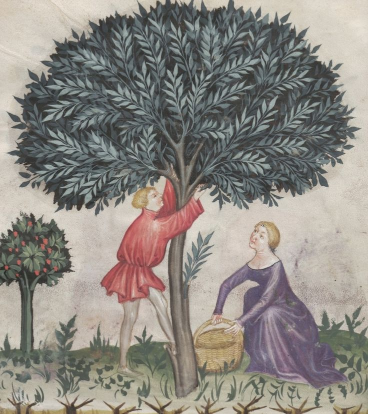 A couple during the olive harvest - Olive | Österreichische Nationalbibliothek - Austrian National Library | Public Domain