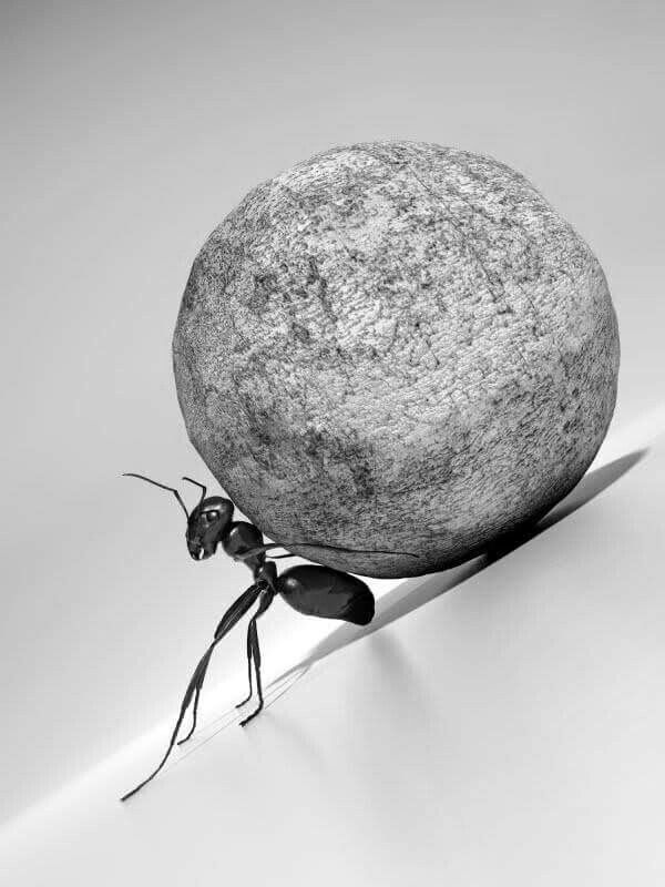 An ants life is hard the day to day toils are like moving ...