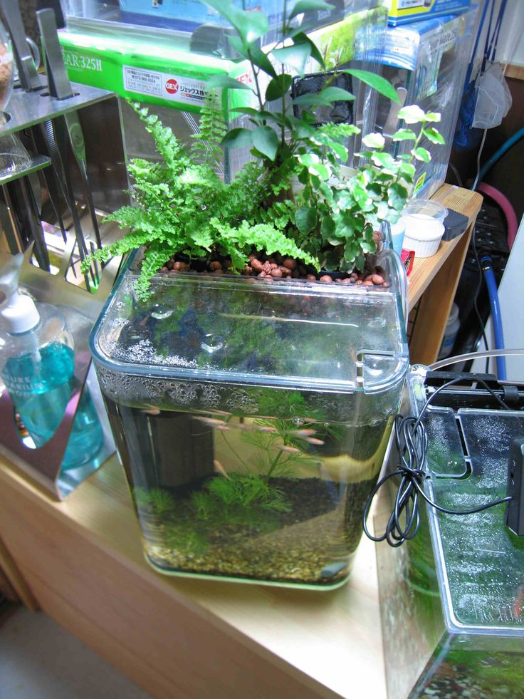 17 best images about aquascaping on pinterest plants for Pond plant filter