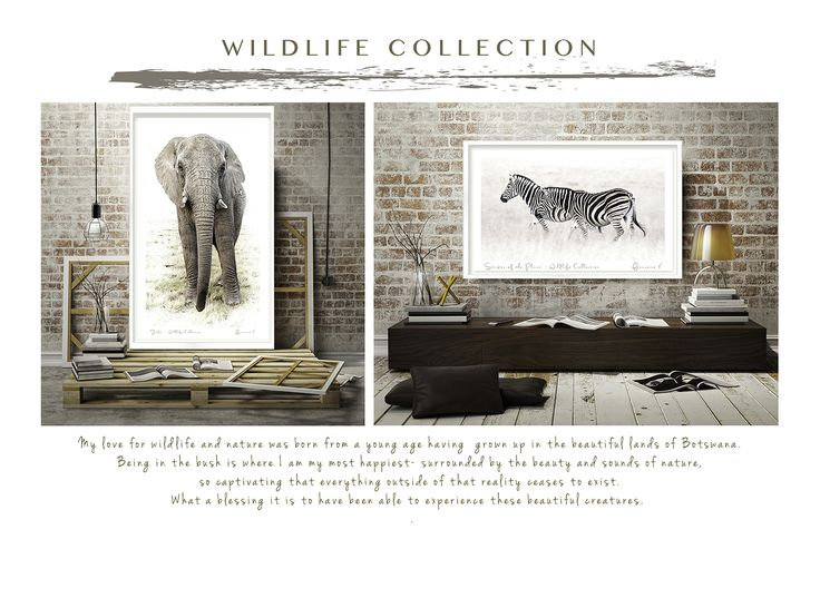 Wildlife Collection by Francoise V