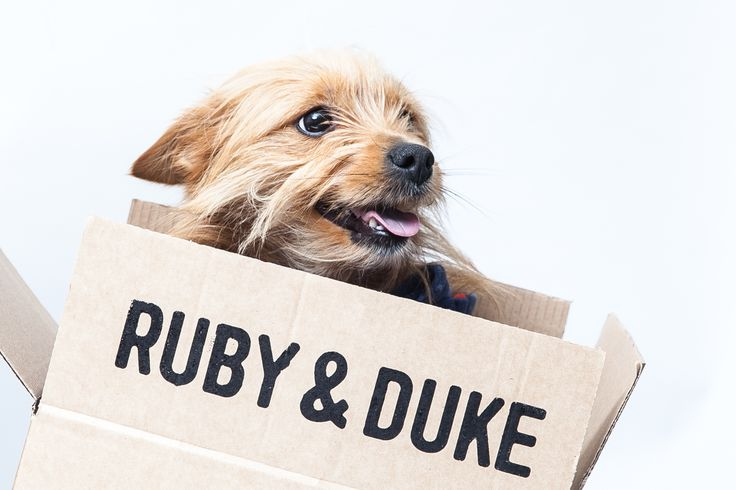 #Dukebox is an exciting and healthy box of toys and treats that can be ordered from www.rubyandduke.com Check it out! ^^, Currently available in the UK & Ireland
