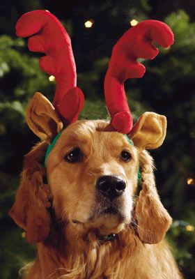 Xmas Pets! BrillyAnt's Pet (insurance) Shop will help you find some great deals here in #UK. Visit our website and we will help you find cheap #pet #insurance.