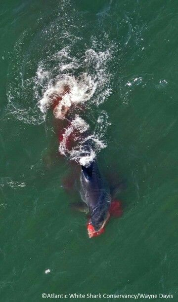 GWS scores a direct hit a gray seal