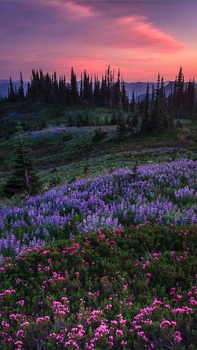 Pastel splendor in the Nisqually Valley of Washington • photo: Bryan Swan on Flickr