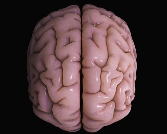 The cerebral cortex is the layer of the brain often referred to as gray matter. It is the outer portion of the cerebrum.