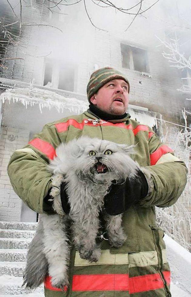 Esses bombeiros não pouparam esforços para salvar a vida dos bichanos e mostraram que é possível resgatar a sua fé na humanidade.