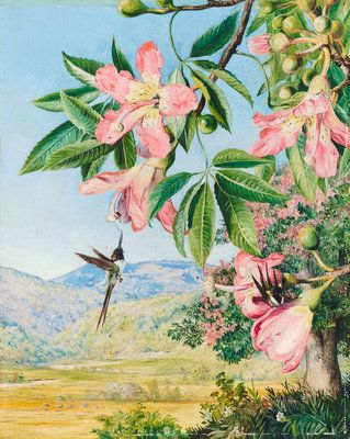 97. Foliage and Flowers of a Coral tree and double-crested Humming Birds, Brazil by  Marianne North