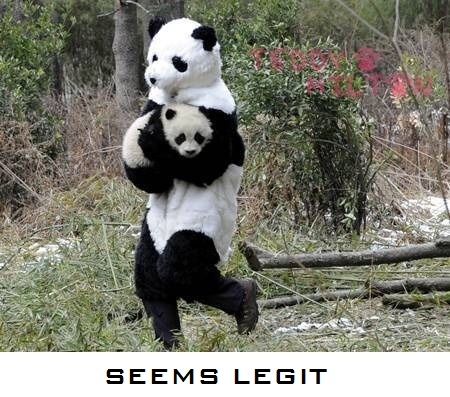 Haha. My secret plan for getting my own baby panda.