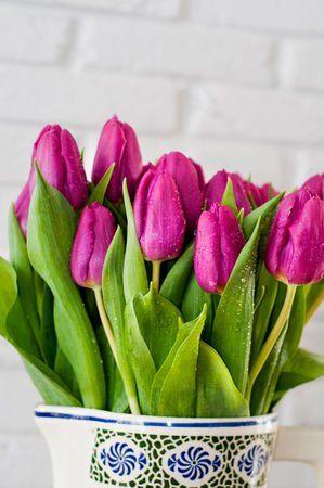 Tulipán: Egy csokor vörös tulipánnal bárki kifejezheti szerelmet. Ezenkívül a ragaszkodást, az elmélkedést és az imát is szimbolizálja. Sárga: Mosolyod olyan, mint a napfény.  Tarka: Csodálatosak a szemeid!  Vörös: Higgy nekem!   Fekete: ritka volta miatt azt mutatja, hogy a megajándékozott személy mindennel drágább.A tulipán a liliomfélék családjának egy nemzetsége. Mintegy 100 faj és több ezer nemesített fajta tartozik ide.