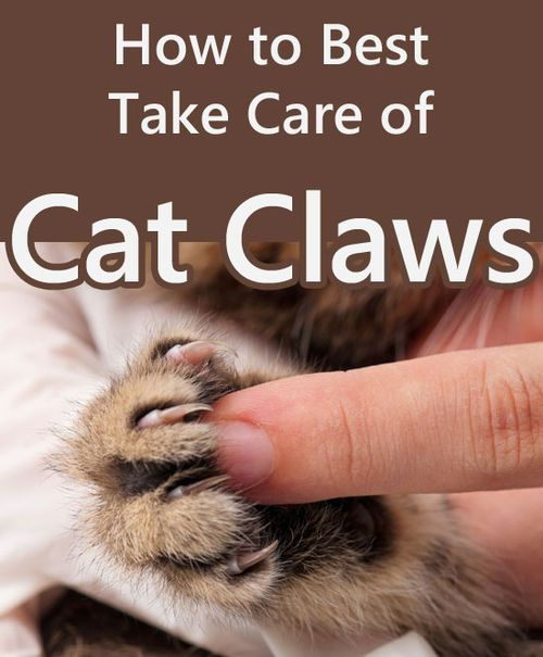 How to Best Take Care of Cat Claws - TheCatSite.com Community