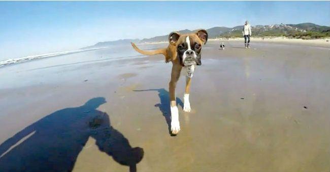 Il cane a due zampe corre sulla spiaggia