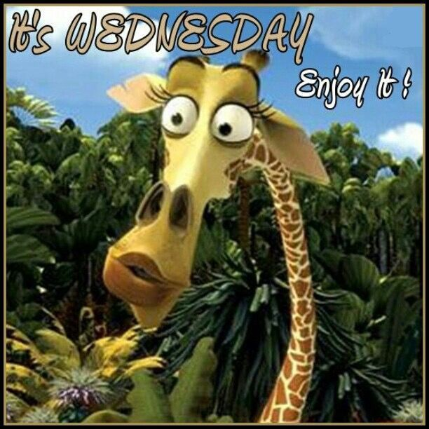 It's Wednesday Enjoy It