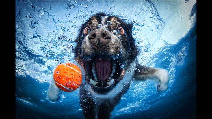 물 속에서의 강아지들 사진 - SETH CASTEEL