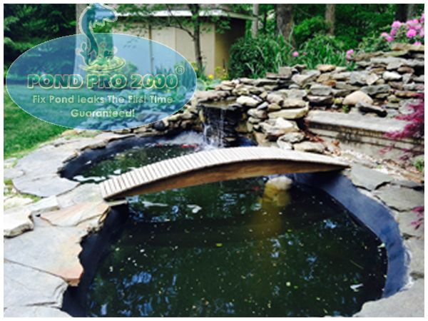 63 best fish pond repair images on pinterest fish ponds for Fish pond repair