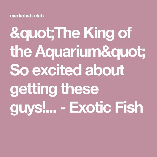 """""""The King of the Aquarium"""" So excited about getting these guys!... - Exotic Fish"""