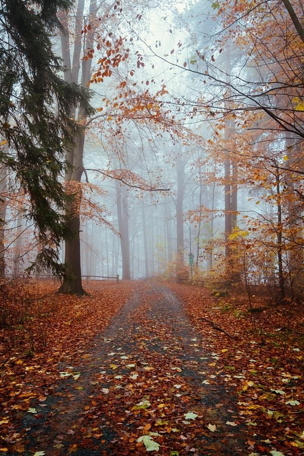 Peace And Calm | Pinterest | Autumn, Mysterious Places And Quebec City