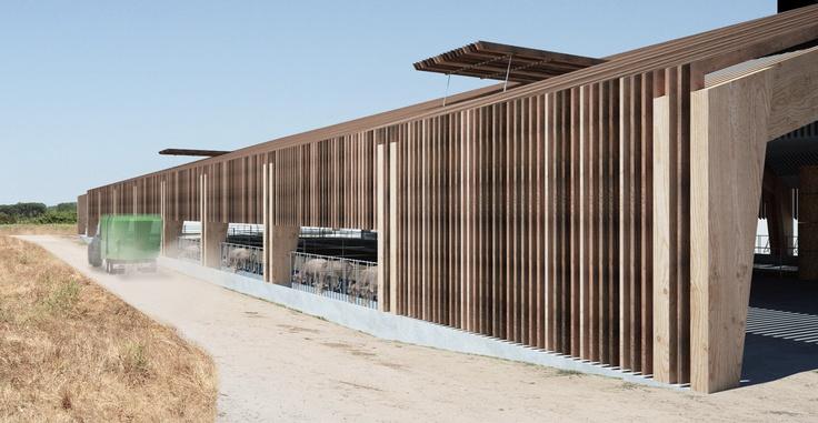 Riorganizzazione attività zootecnica e struttura per l'allevamento di bovini nella tenuta di San Rossore
