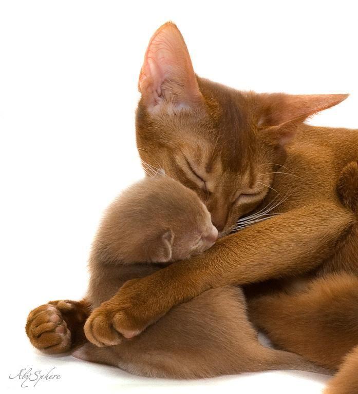 #cat #baby
