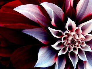 Flores hermosas del mundo