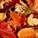 First Day of Fall 2013 Autumnal Equinox Dates Times Photos