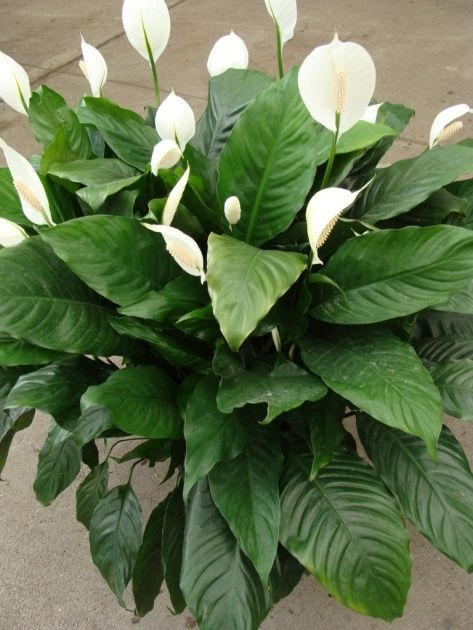 Name Of Tropical Plants With Pictures | Flower pots ...