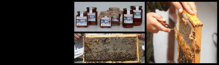 Thyme Honey - shop now!