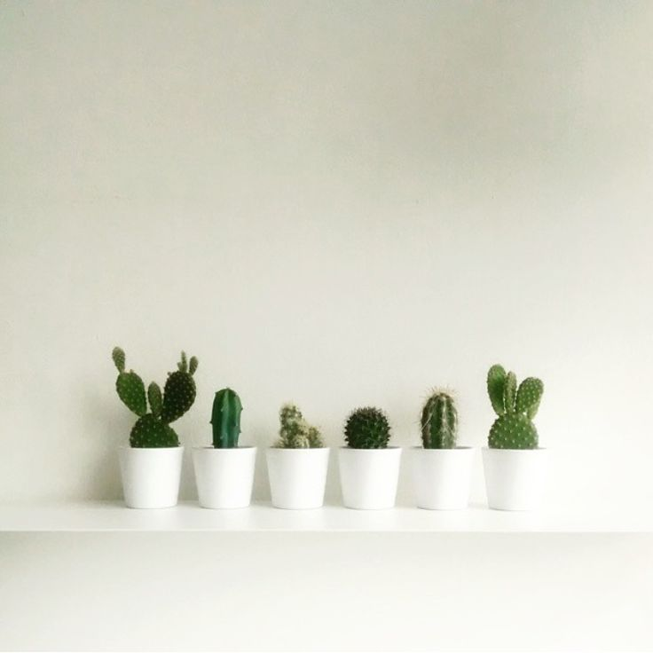 cactus More