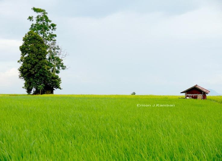 Simabua-Tanah Datar  West Sumatera, Indonesia