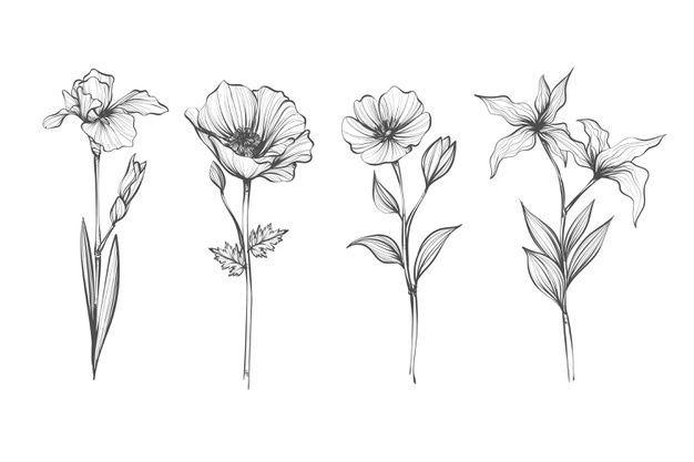 Freepik Freevector Blume Jahrgang Blumen Hand Hand Gezeichnete Realistische Hand Gezeichnet In 2020 Handgezeichnete Blumen Blumen Zeichnen Blumenzeichnung