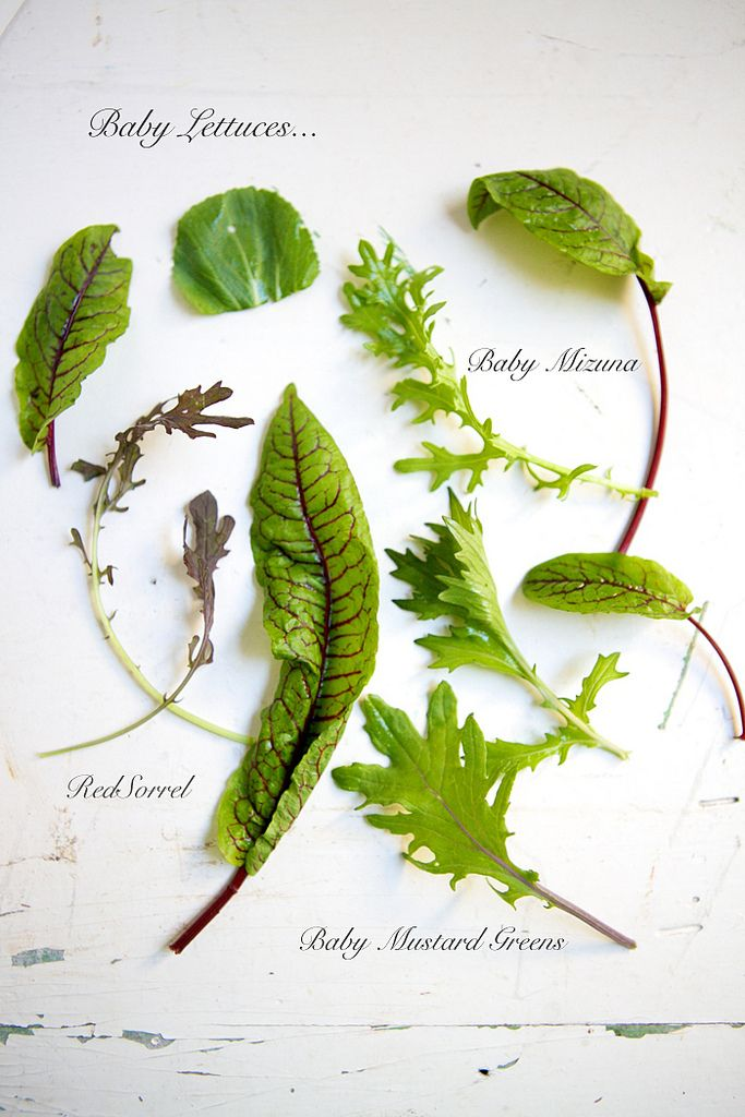 Wilted spinach, kale, chard, and escarole are easy to prepare and high in nutrients, as are all fresh green vegetables. Always have some on hand, and always throw some in with soups, risottos, pastas.