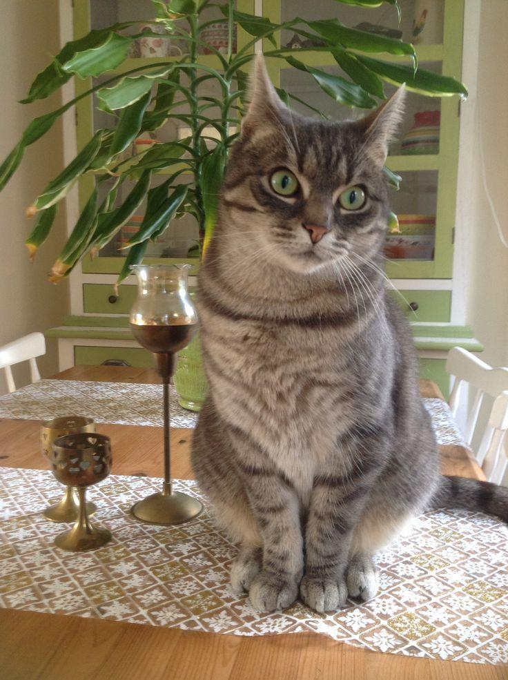 Ollie wenst iedereen fijne feestdagen #ollie #cat #kat