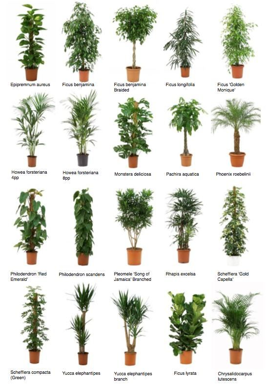20 best images about Low or artificial light plants on Pinterest