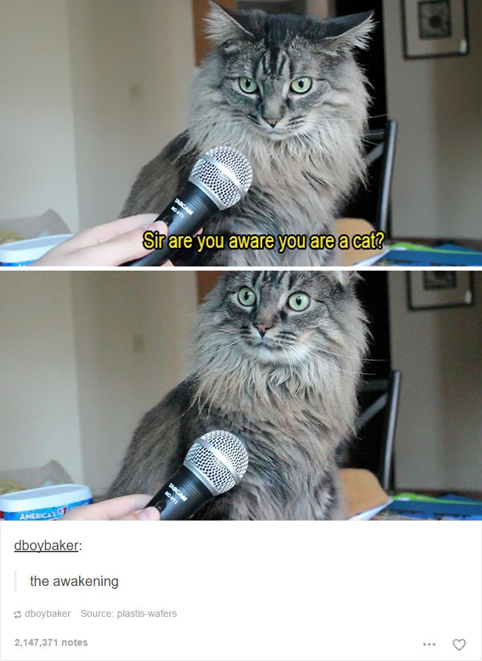 Best SnapAnimalsKooKoo Images On Pinterest Architecture - 45 tumblr posts about animals that are impossible not to laugh at