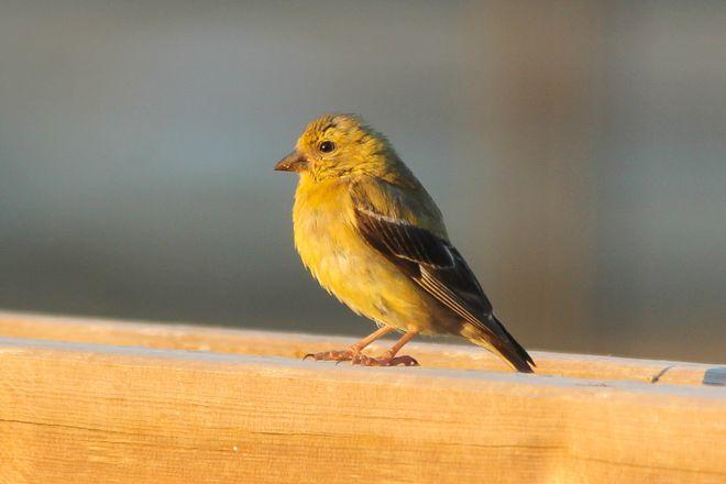 Photos & Videos: Birds - The Weather Network