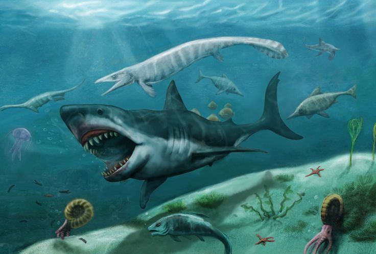 Sea Monsters Megalodon 134 best Sea Mo...