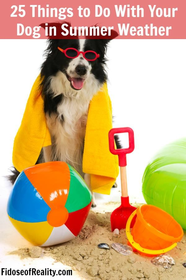 25 things to do with your dog in summer weather. From indoors to outdoors, dog summer activities are here.