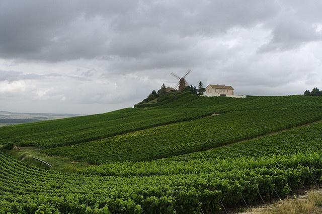 Champagne fields near Reims, France