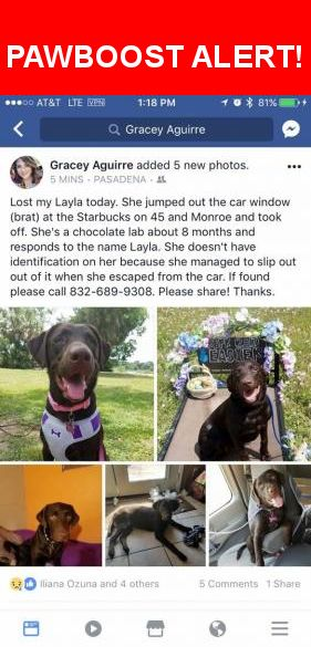 Please spread the word! Layla was last seen in Houston, TX 77017.  Message from Owner: You can call either number listed! Let's bring Layla home! She jumped out at Starbucks because she saw a squirrel!! Gracey needs her baby home!  Nearest Address: Near I- 45 & Monroe Rd