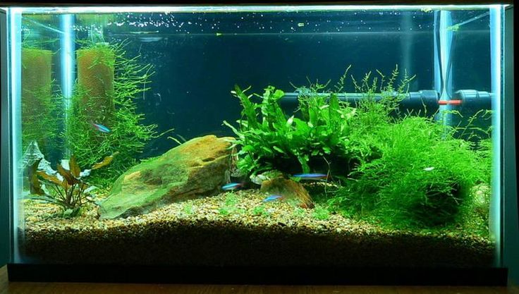 Fishybusiness is the provided  best ways to do aquarium cleaning, pond cleaning and more services with very affordable price.