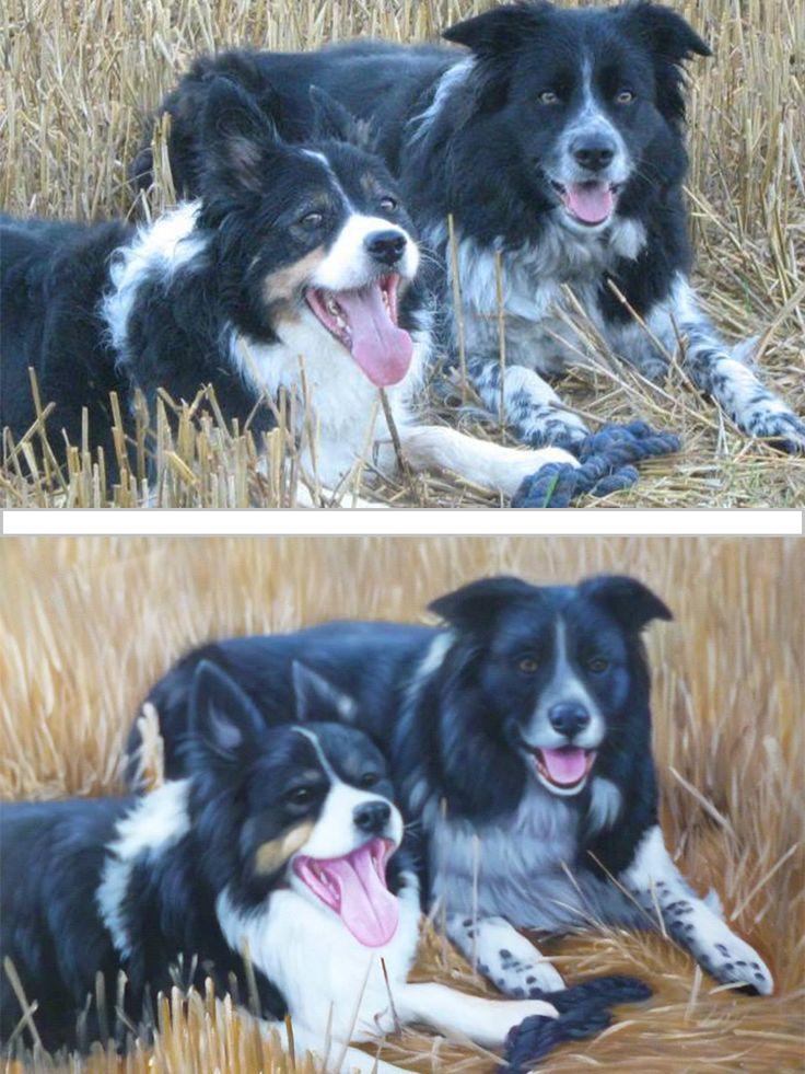 13 VOOR-en-NA Honden Portretten Olieverf Schilderijen - Dierbewust
